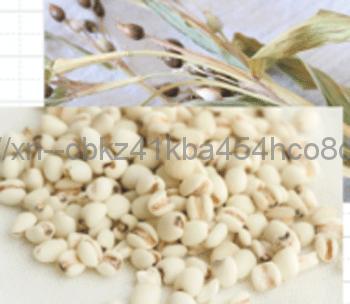 肌のデコボコケア効果のあるハトムギ種子エキス