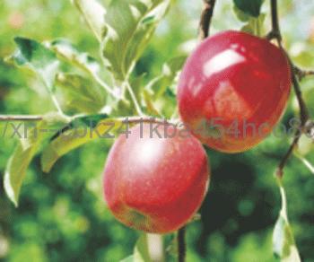 角質除去効果のあるリンゴ酸